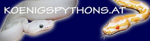 koenigspythonsBanner-300x83