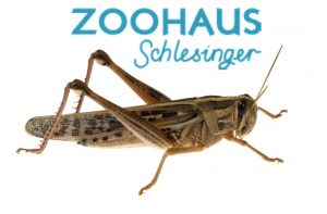 banner-zoohaus