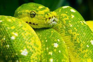 reptiliendoktor-208277044-nemoci python1
