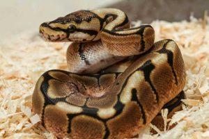 reptiliendoktor-293416040-nemoci python3